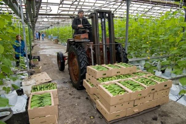 Открылась вторая очередь комбината «Овощи Ставрополья»