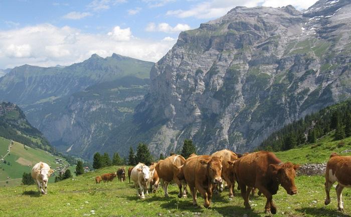 Деньги фермерам Осетии