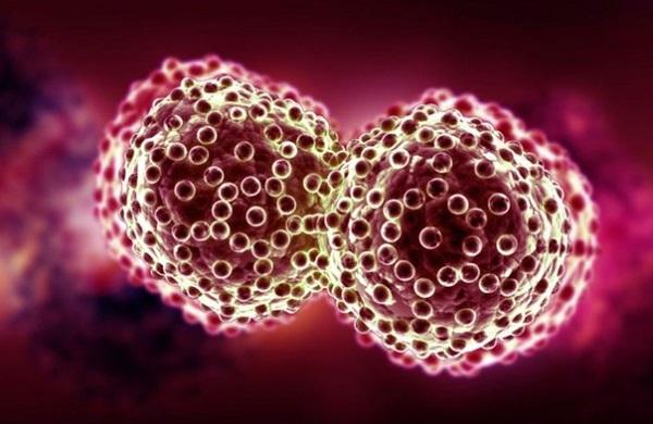 Универсальное средство против рака найдено?