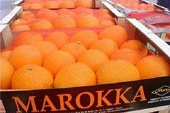 На 40% вырастут поставки в Россию сельхозпродукции из Морокко