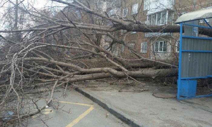 В Алтайском крае бушуют непогода и ураганы
