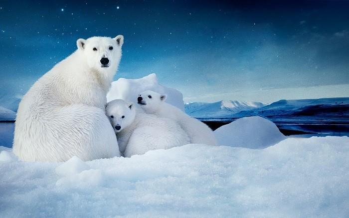 Путин призвал защищать природу Севера фото 2