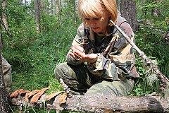 Ульяновскую область обследуют на предмет лесопатологий