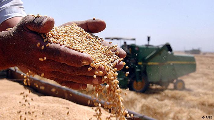 Излишки зерна Россия раздаст нуждающимся странам