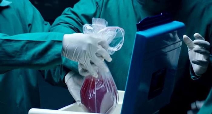 Сердце донора научились хранить почти сутки