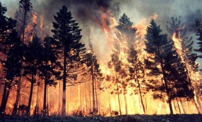 Сибирь в огне. Горит один миллион гектаров тайги. фото 2