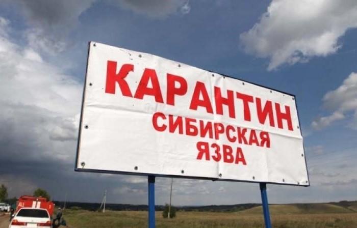 В РОССИИ СИБИРСКАЯ ЯЗВА. ОТКУДА?! фото 2