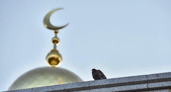 Перевод земли под мечеть одобрили в Екатеринбурге фото 2
