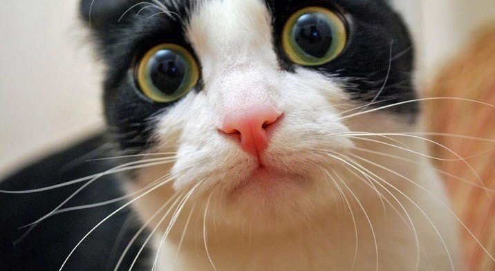 Предложение ввести налог на собак и кошек назвали бредом. фото 2
