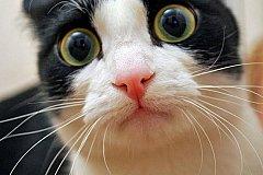 Предложение ввести налог на собак и кошек назвали бредом.