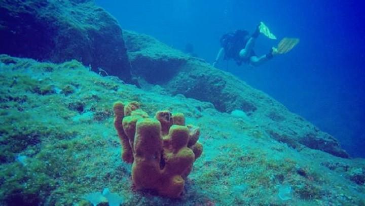 Лекарством от коронавируса может стать вещество из морских глубин. фото 2