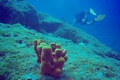 Лекарством от коронавируса может стать вещество из морских глубин.