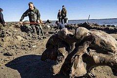 В ЯНАО найдены останки Мамонта.