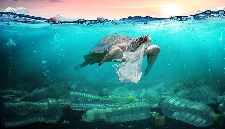 Ученые шокированы количеством частиц микропластика в морских продуктах. фото 2