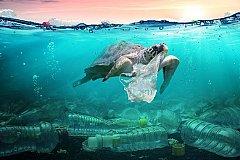 Ученые шокированы количеством частиц микропластика в морских продуктах.