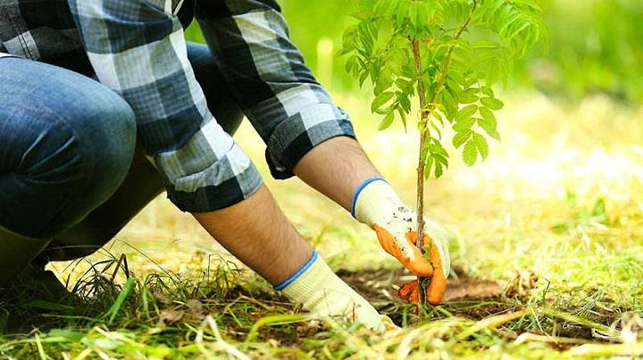 Сорок миллионов деревьев было высажено в России за осень