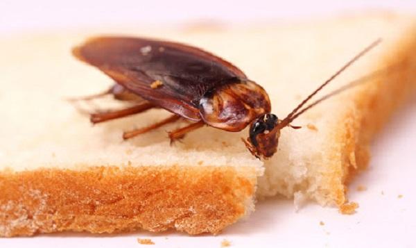 Россиян хотят кормить хлебом из насекомых