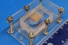 Ученые США вырастили ткань печени