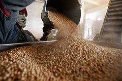 ОЗК планирует заняться растениеводством