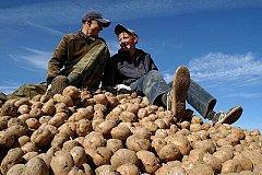 Северная Осетия ударно собирает картофель