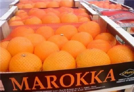 На 40% вырастут поставки в Россию сельхозпродукции из Морокко фото 2