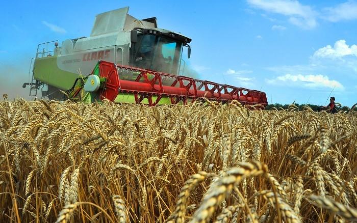 Рекордным для России может стать сбор урожая зерна в этом году фото 2