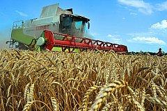 Рекордным для России может стать сбор урожая зерна в этом году