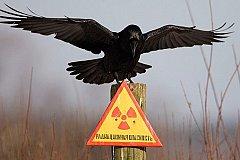 Чернобыль повторится – мнение ученых