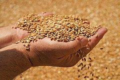 В 2017 году Минсельхоз прогнозирует урожай зерна в 100 млн тонн