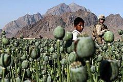 Афганистан под патронатом США стал крупнейшим поставщиком наркотиков в Россию