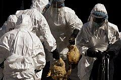 В Татарстане разыгрался птичий грипп