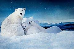 Путин призвал защищать природу Севера
