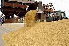 Мадуро хочет увеличить объемы закупок российской пшеницы