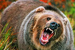 На Таймыре медведь задрал ребенка
