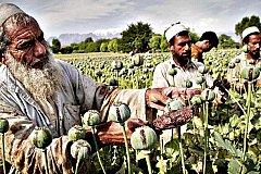 Афганистан побил собственный рекорд по производству опиума