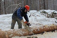 Севастополь  обеспечат дровами, прокладывая трассу