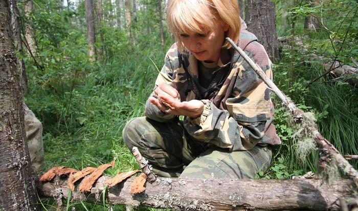 Фото: Российский центр защиты леса