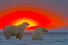 Почти 63 млрд рублей потребуется для обеспечение Арктики спутниковой связью