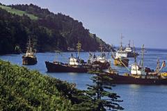 На Курилах ударно развивают рыбопроизводство
