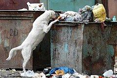 В России создана новая госструктура - единый оператор по мусору