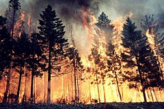 Сибирь в огне. Горит один миллион гектаров тайги.